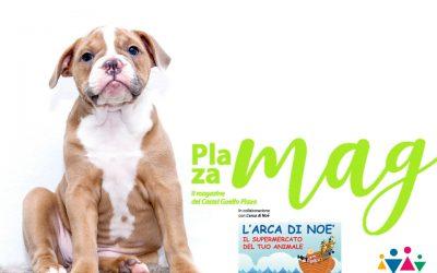 #2 – Pet-care: consigli per divertirvi di più ma… responsabilmente!